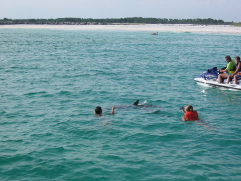 Dolphin Encounters Dolphin Tours Panama City Beach Florida