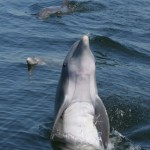 Photo gallery Dolphin Tours Panama city Beach