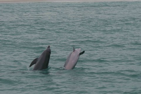 Photo gallery Shell Island dolphin tour PCB FL