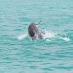 Snorkeling Shell Island Panama city beach Florida