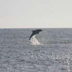 Shell Island waverunner dolphin tour Panama city beach FL