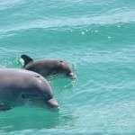 Shell Island dolphin swim PCB FL