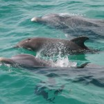 Dolphin Tour Schedule PCB FL Reservations Appointment Times