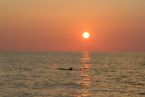 Sunset dolphin trips PCB FL